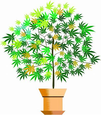 Plant Clipart Potted Vector Plants Tree Flower