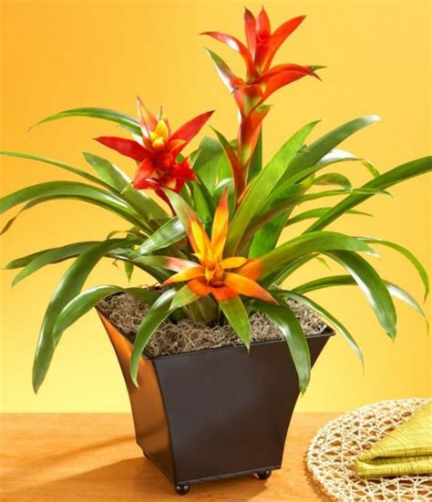 best small indoor plants low light flowering indoor house plants low light