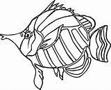 Coloring Angel Nice Drawing Fish Angelfish Printable Getcolorings Drawings Getdrawings sketch template