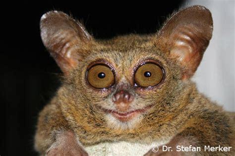 News: A New EDGE Mammal? EDGE of Existence