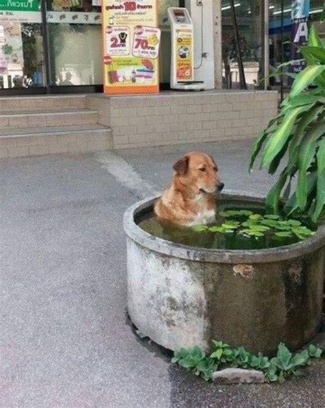30 Wtf Dog Photos That Make No Sense At All