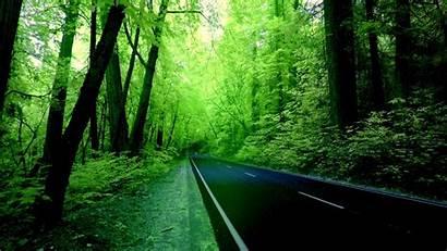 Nature Computer Wallpapers Forest Road Resolution Desktop