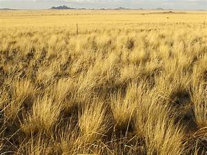 Grasslands Habitats Wwf