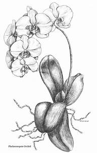 711 best images about Art - Watercolor orchids on ...