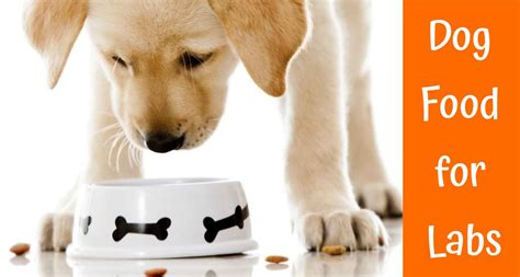 top   dog food  labs guide review