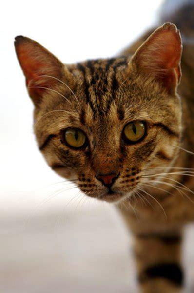 male cats accept  cat pets