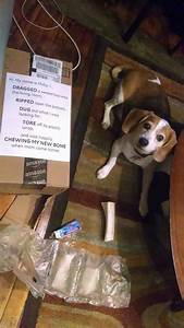 The, Most, Hilarious, Dogshaming, Photos, From, 2014