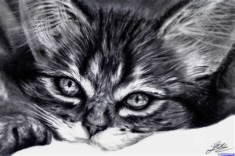 How To Draw A Realistic Kitten, Cute Kitten, Step By Step