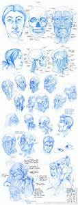 1000  Images About Facial Anatomy On Pinterest