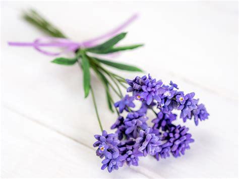 Bilder Mit Lavendel by Lavendel Aus Bl 252 Tenpaste Einfache Und Schnelle F 252 Llblume