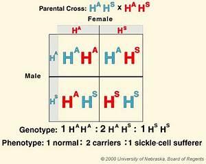 Pin On γενετική