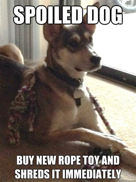New Dog Meme - spoiled dog buy new rope toy and shreds it immediately spoiled dog quickmeme