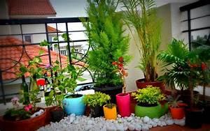 Welche Pflanzen Fürs Schlafzimmer : balkonbepflanzung ideen pflanzen f r jede himmelsrichtung ~ Frokenaadalensverden.com Haus und Dekorationen