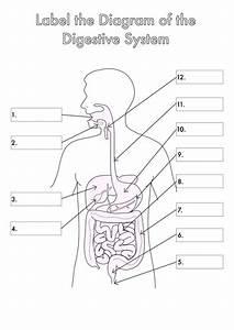 Skeletal System Diagram Label