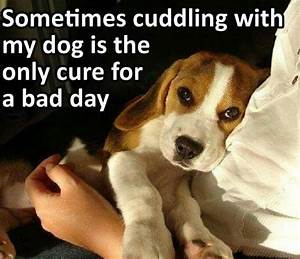 421 best I miss my Beagle Molly images on Pinterest | Cute ...