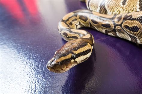 Pet Health: Snakes, spiders or ferrets? Choose the right ...