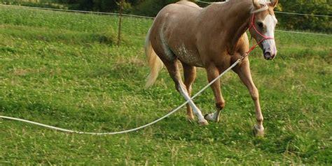 horsemanship und muskelaufbau kurs ohne eigenes pferd