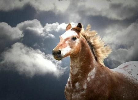Hours Animal Wallpaper - powerfull appaloosa horses animals background