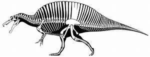 New Spinosaurus silhouette by Scott Hartman | Dinosaurs ...