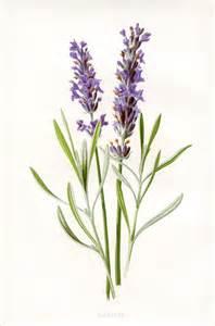 printable wedding program lavender botanical printable graphicsfairy the graphics