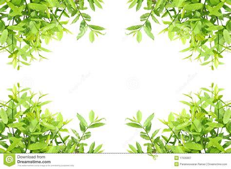 framing leaves image gallery leaf frame