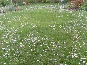 Green Earth Almanac: Put a Little Life in Your Lawn