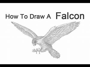How to Draw a Peregrine Falcon - YouTube