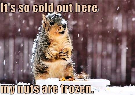 It S So Cold Meme - it s so cold ny quot meme s quot world pinterest
