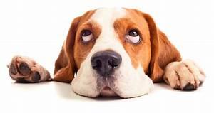 Puce De Chien : puces des chiens 3 astuces de grands m res grands m res ~ Melissatoandfro.com Idées de Décoration