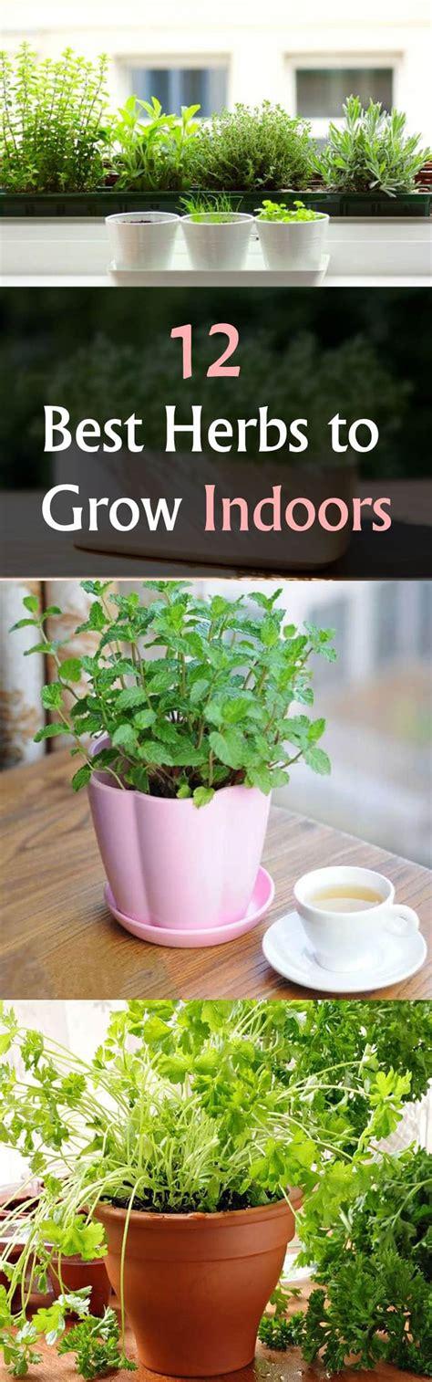 grow indoors herbs herb indoor garden basil balconygardenweb rosemary sun windowsill oregano