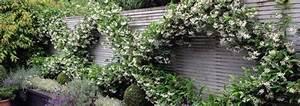 Kletterpflanzen Immergrün Winterhart : kletterpflanzen f r jeden garten ~ Michelbontemps.com Haus und Dekorationen