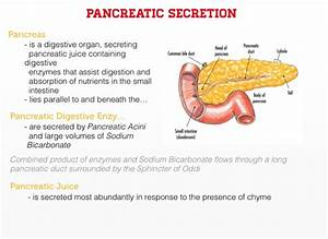 Pancreatic Juices Aid Digestion And Absorption By