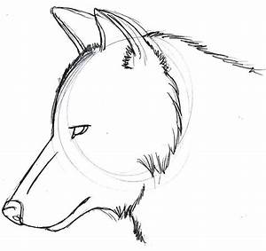 Wolf Head Sketch 2 by sparkpaw on DeviantArt