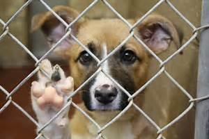 Clear Garlands Animal Shelter - The Garland Rowlett Messenger Sterilization