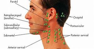 Lymph Nodes In Neck