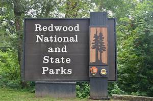 Redwood National Park MowryJournal com