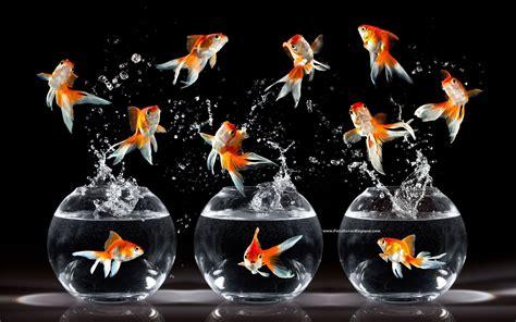 fonds decran poisson tous les wallpapers poisson