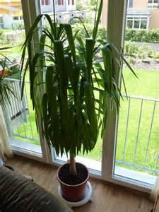 wohnzimmer palme wohnzimmer palme elvenbride