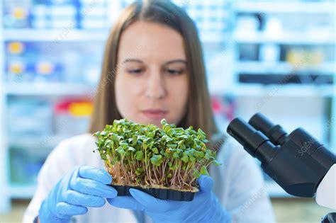 Female biologist holding seedlings - Stock Image - F013 ...