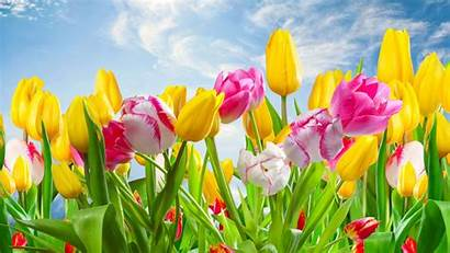Flowers Spring Wallpapers Desktop Screen Flower Nature