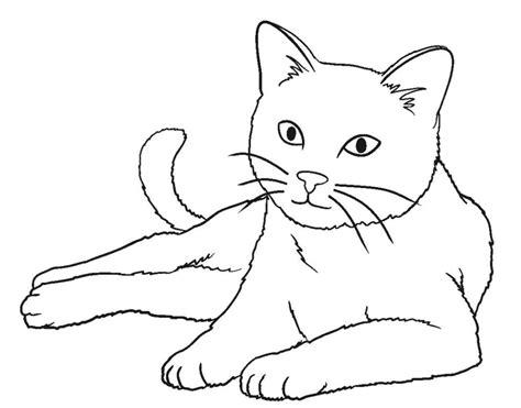mewarnai binatang kucing belajarmewarnai info