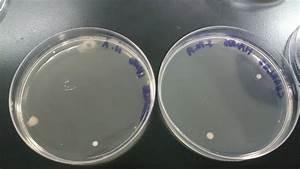 Biology For Technologists U0026 39  Laboratory Reports  Lab 4