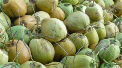 manisnya bisnis air kelapa kemasan tribunnewscom