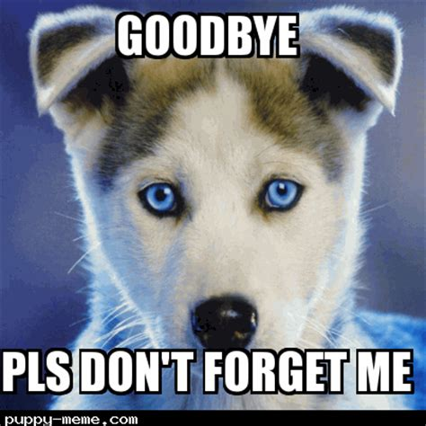 Goodbye Memes - cute animal goodbye www pixshark com images galleries with a bite