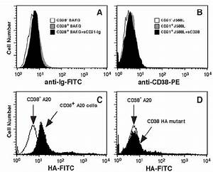 Murine Cd38 Specifically Binds Hyaluronic Acid But Does Not Interact