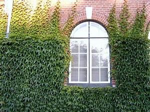 Plantes Grimpantes Mur : plantes grimpantes le lierre a commenc envahir la ~ Melissatoandfro.com Idées de Décoration