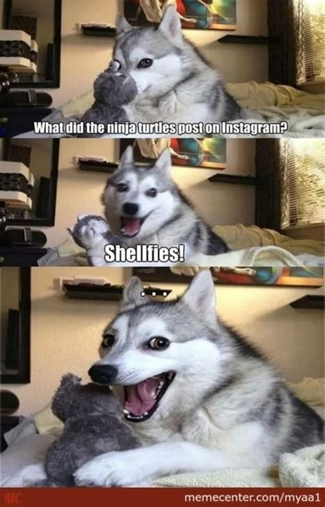 pun dog puns  dogs  pinterest