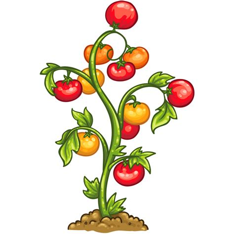 Item Detail Tomato Plant ItemBrowser ItemBrowser