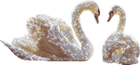 gifparadise swan gifs