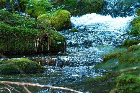 In Der Natur by Kostenlose Bild Moos Wasser Natur Fluss Strom Landschaft